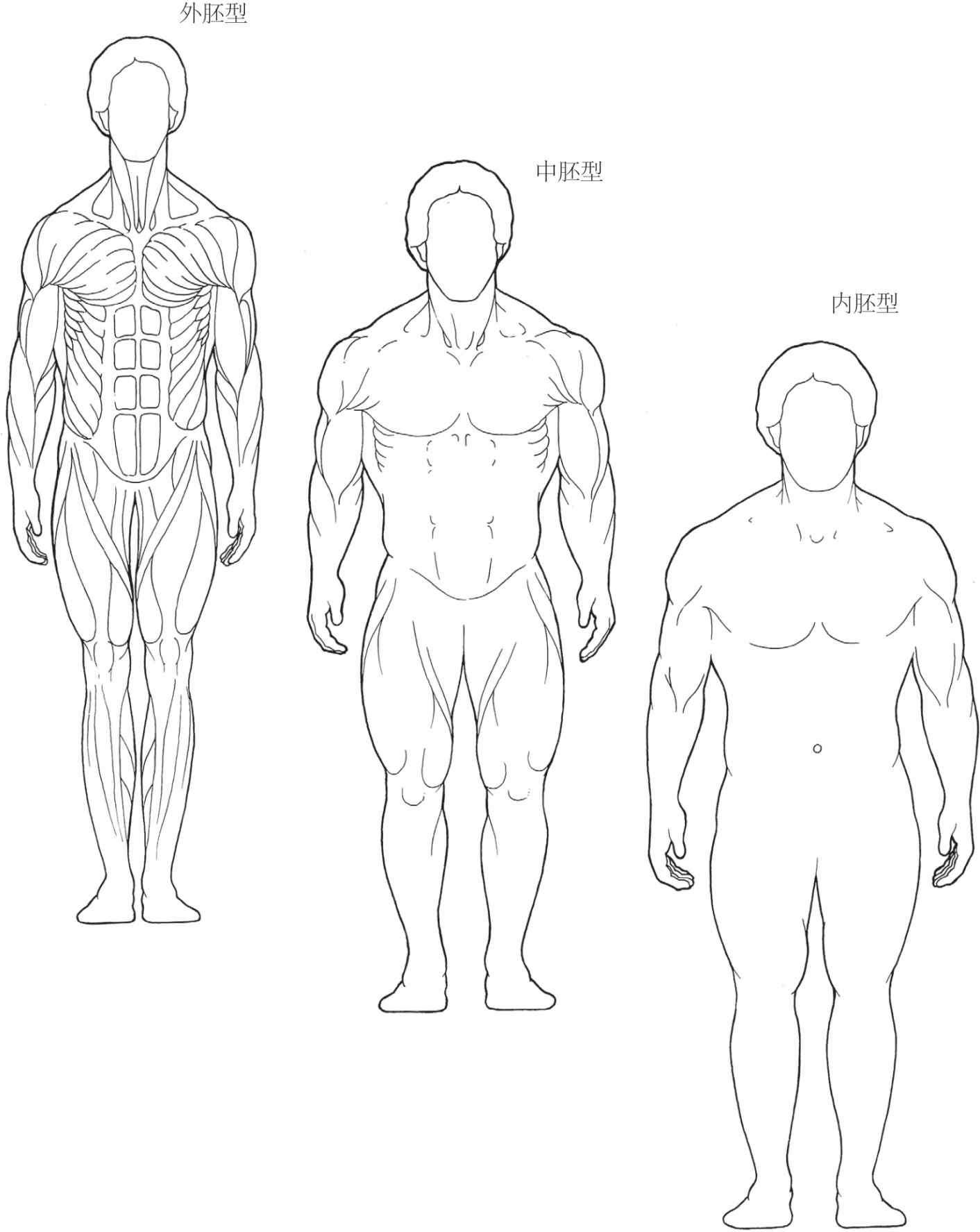 体型分类(somatotype)