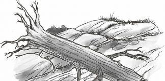 倒进河里的大树是最常见的一种过滤网。过滤网就是指水里的障碍物,水可以从中流过,但人和船却会被绊倒。倒进水里的树木通常都在急流转弯时河道的外侧