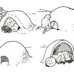 塑形圆顶屋
